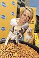 chelsea kane puppy pedigree 07