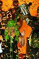 cody simpson alli sabrina carpenter slimefest melbourne 13