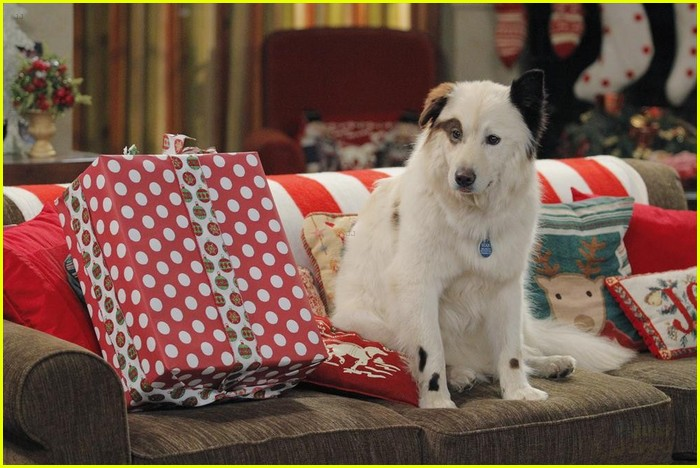 Full Sized Photo Of Dog With Blog Stan Steals Christmas