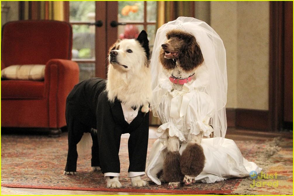 dog with blog olivia holt stan married stills 19