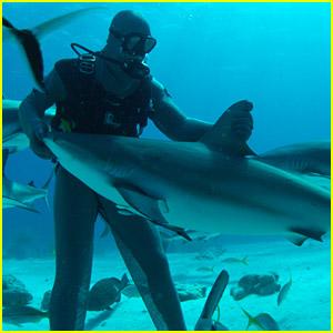 Demi Lovato, Sophia Bush & More Get Ready For Shark Week 2014
