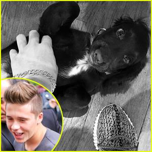 Brooklyn Beckham Has a Brand New Puppy!