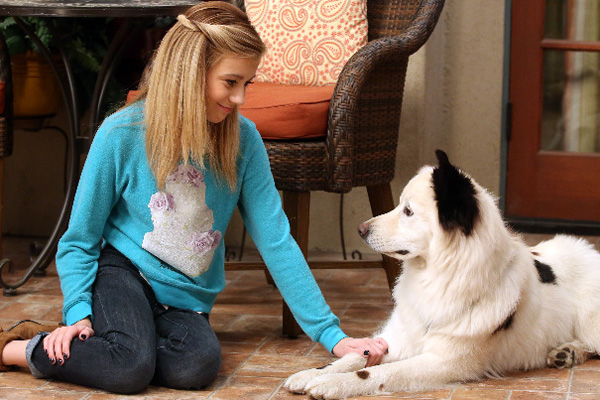 Avery from dog with a blog 2015