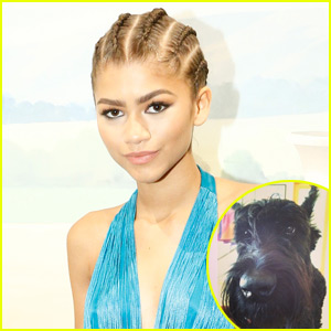 Zendaya's Dog Midnight Sadly Passes Away