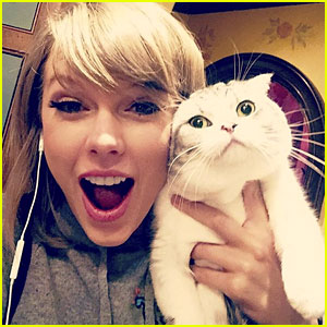 Meredith, aka Taylor Swift's Cat, Spotted Watching Fans from Window!