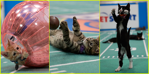 When Does The Kitten Bowl 2017 Air? See All The Pics of the Feline Football League Now!