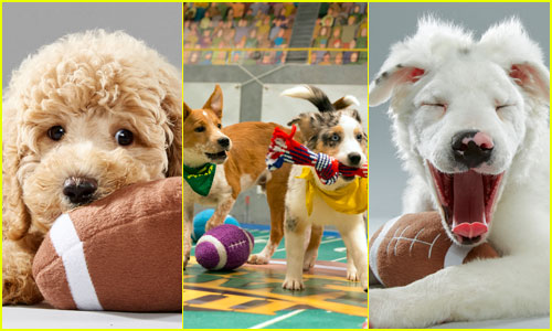 When is the Puppy Bowl? Plus, We've Got Photos!