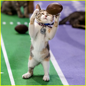 Kitten Bowl V Is Here & Here's How You Can Watch!