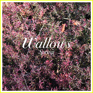 Dylan Minnette's Band Wallows Just Dropped Their Debut EP 'Spring' - Stream & Download!