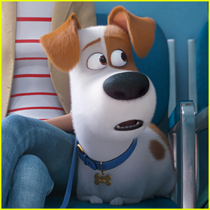 'Secret Life of Pets 2' Trailer Debuts Online - Watch Now!
