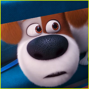 Watch the Adorable Trailer for 'The Secret Life of Pets 2'!