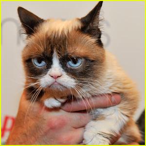 Internet Famous Feline Grumpy Cat Passes Away