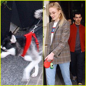 Joe Jonas & Sophie Turner Get In Pre-Wedding Nap With Dog in Paris