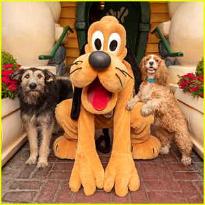 'Lady And The Tramp' Stars Monte & Rose Meet Pluto at Disneyland!