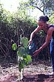 Monique-tree monique coleman africa un 01
