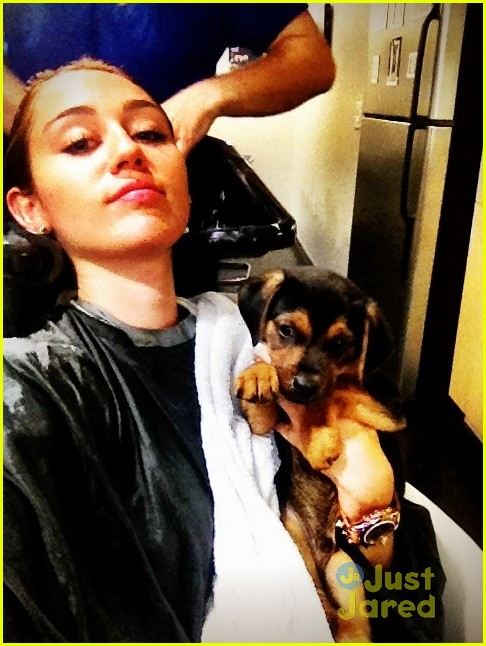 miley cyrus puppy happy 04