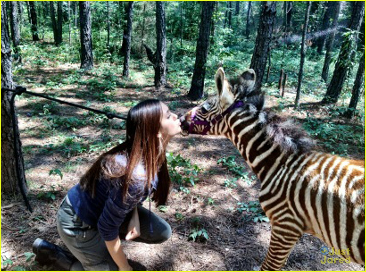 dobrev zebra kisses 02