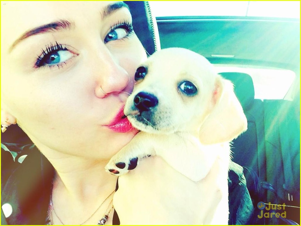miley cyrus bean puppy 02