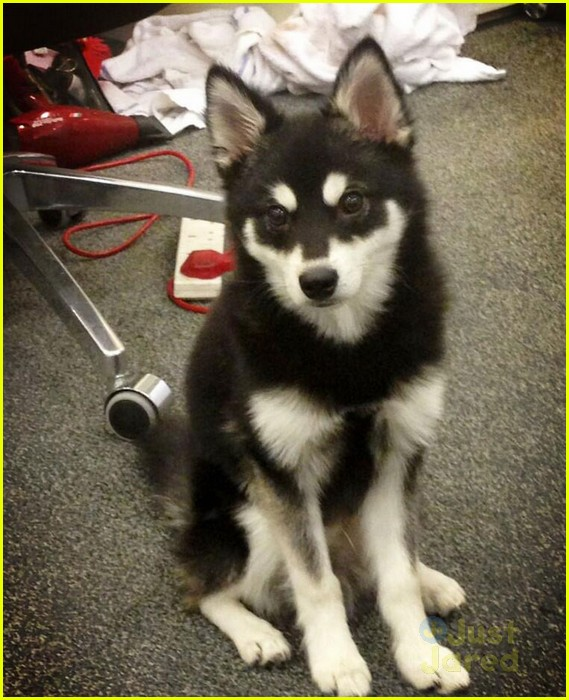 liam payne new dog with girlfriend danielle peazer 01
