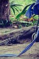Paul-vacay paul wesley phoebe tonkin tropical vacation together 02