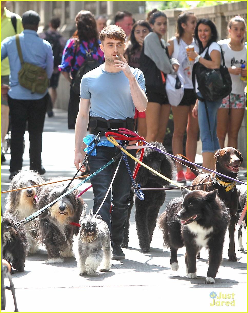 Dan Radcliffe Walking Dogs